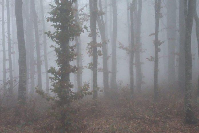 un tratto delal Via degli Dei tra bologna e Firenze, immerso in una fitta nebbia